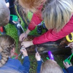 Primary 4/5 Minibeast hunt with the National Trust.